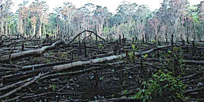 Mayan Farming Slash and Burn